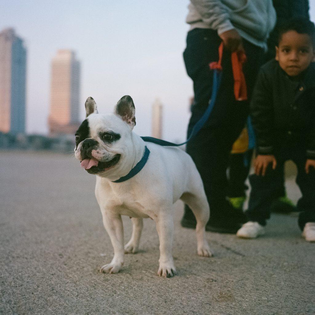 Hund in Barcelona
