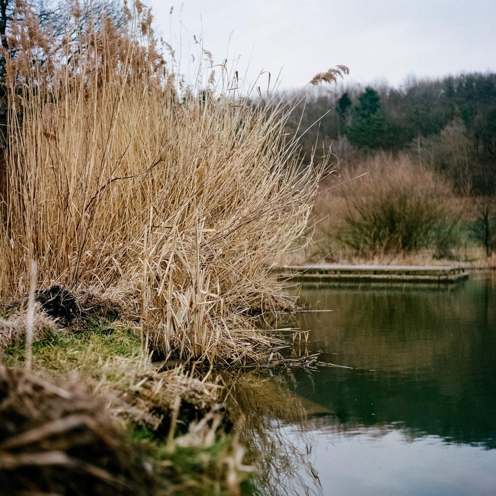 Strauch am See